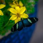 Flowers at Brookside Gardens thumbnail