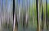 Wischer im Darß (jmwill2005) Tags: wisch wischer wischerbild langzeitbelichtung wald moor mecklenburgvorpommern ostsee zingst ahrenshoop prerow darss dars baum bäume
