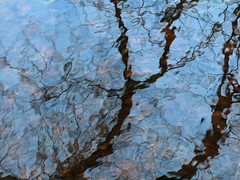 TwoTrees (vertblu) Tags: reflection reflections reflectedtrees reflectedskies mirroring mirrored distorted distortion blue black pattern patterning patterned patterns abstract abstrakt abstraction abstractnature abstracted abstractreflections natureabstracted water waterabstract watersurface onthewater pond pondsurface pondscene pondlife brown vertblu