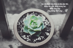 116 (loanimages) Tags: succulent plants flower pot quote