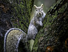 Happy Squirrel (Beth Crawford 65) Tags: wildlife nature animals squirrels happy furry spring rain outdoor illumination look photography gallery fluffy tails tree bark aruna
