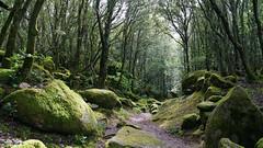 The forest of Cucuruzzu (Götz_) Tags: france frankreich corse corsica korsika forest wald nature natur landscape landschaft tree trees baum bäume