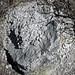 Sandstone (Middle Pennsylvanian; Frazeysburg Pit, Muskingum County, Ohio, USA) 1