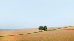 Two Trees in the Field (panfot_O (Bernd Walz)) Tags: trees tree field fields rural countryside emptiness space vastness agriculture farmland transformedlandscape artificiallandscape fineart contemplation minimalism minimalistic