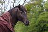 sous la pluie (tacitasylvaine) Tags: flickrunitedaward cheval