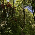 Along The Wildwood Trail thumbnail
