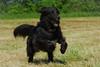 Like the Wind (lux verum) Tags: likethewind dog hund lux verum luxverum