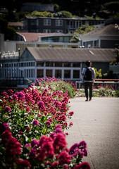 Sunny Sausalito (Rabican7) Tags: california sausalito sunny spring colorful flowers people figure walkway bright houses bokeh dof blur vibrant visitor tourist streetphotography nikon sigma photography traveler