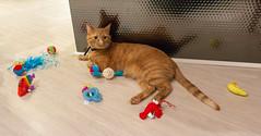 IMG_4145 (jaglazier) Tags: 2018 51018 animals birthdays bloomington cats indiana kittens mammals may parties toys usa copyright2018jamesaglazier interiors prone tiger unitedstates