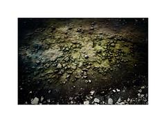 Öland rocks (staca) Tags: leica m9 elmarit 28mm
