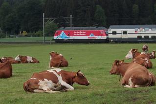 SBB Lokomotive Re 460 065 - 6 mit Taufname Rotsee mit Werbung COOP mit Intercity IC Zug 978 I.nterlaken O.st - B.asel ( 339 m - 637 t ) zwischen Gümligen und Rubigen im Kanton Bern der Schweiz