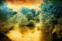 Awesome lake ... (Julie Greg) Tags: nature texture tree trees park lake colours canon5dmarkiv england kent
