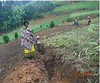 Uganda Kabale 2018 - Katushabe dug a trench to reduce erosion (Foods Resource Bank) Tags: foodsresourcebank frb world renew pag humanitarian charity food security agriculture development training conservation ag mulching intercropping income women soil fertility liquid manure