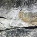 Sandstone (Middle Pennsylvanian; Frazeysburg Pit, Muskingum County, Ohio, USA) 15