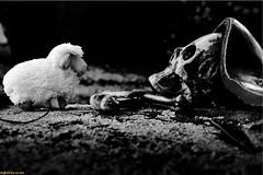 Staring Contest (TheOnlyScoss) Tags: noiretblanc monochrome skull sheep grave cemetary graveyard nürnberg closeup detail weird item object strange dark contrast johannisfriedhof franconia