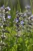flowers (Wolfgang Binder) Tags: flower flowers nature macro nikon d7000 zeiss planar planart2100 grass