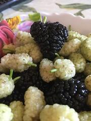 Era il tempo delle more ...... (esterinaeliseo1) Tags: cibo macro blakwite more fruttadistagione frutta gelsi