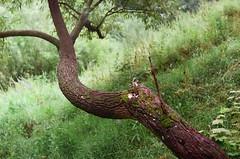 (chirkofun62) Tags: 35mm analog photo analogphoto пленка film filmphotography filmphoto 35mmphoto 35mmfilm filmisnotdead зенит ет зенитет zenith zenithet kodak kodakcolorplus