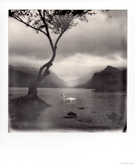 The Lone Tree (Roj) Tags: sx70 sourcerojsmithtumblrcom landscape llanberis mountains lake film originalphotographers analogue snowdonianationalpark tree swan instantphotography analog filmisnotdead squareframe makerealphotos polaroid impossibleproject photographersontumblr