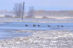 DSC_0108_724-1 (tevfikyildiz) Tags: bird oiseau landscape montagne mountain nature neige paysage snow vosgessky serene panaromas river water lac