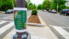 2018.05.06 Vermont Avenue, NW Garden - Work Party, Washington, DC USA 01913