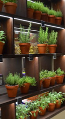 A Wall Of Herbs [Valletta - 25 April 2018] (Doc. Ing.) Tags: 2018 malta valletta lavalletta ilbeltvalletta city capital spring plant herb vase herbs shop