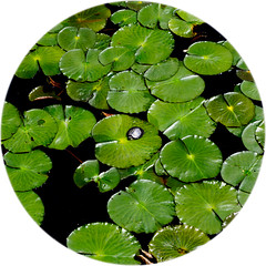 NY prIME TIme .. four! (m_laRs_k) Tags: turtle fauna animal sunday 7dwf vivid brooklynbotanicalgarden nyc newyorkcity usa