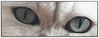 Catch The Eyes Of The Cat (SoS) (myphotomailbox) Tags: rotterdam netherlands strevelsweg indoor eyes cat eyecatcher animal smileonsaturday dier animalia tier hewan hayvanlar bieste