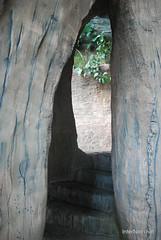 Екзотаріум Ботанічного саду імені Гришка, Київ InterNetri  Ukraine 24