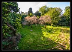 Paupers' Graves (veggiesosage) Tags: nottingham aficionados gx20 rockcemetery churchcemetery cemetery graveyard tamronaf1750mmf28xrdiiild