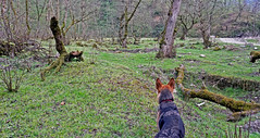 Dog-View (Poria) Tags: nature view landscape jungle forest dog animal tree green sky