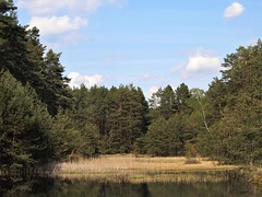 9 (silvy-s) Tags: nature borytucholskie trees m43 epl1 forest