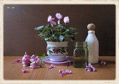 Spring Work (Esther Spektor - Thanks for 12+millions views..) Tags: stilllife naturemorte bodegon naturezamorta stilleben naturamorta composition creativephotography art spring tabletop flowers cyclamen alstromeria plant pot plate petals bottle jar water glass ceramics pattern ambientlight white green pink purple brown estherspektor canon