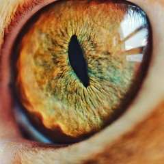 Opie Eye (AMRosario) Tags: tabby kitten eyeball fuji cat lightroom macro spherical cateye eye closeup nikkor60mmmicro reflection fujifilm newyorkcity micro xt20