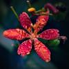 s p e c t r u m (Elton Pelser) Tags: nature plant square 11 photography color flower flora colourful nikond3400