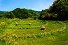 Arcs (Masa_N) Tags: bluesky nara spring ruralarea landscape tree terracedfield ricefield green grass asuka japan field 明日香村 奈良県 日本 jp