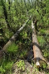 IMGP14127 (Łukasz Z.) Tags: starezaucze lubelskie rzeczpospolitapolska poleskiparknarodowy nationalpark sigma1750mmf28exdchsm pentaxk3