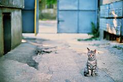 hostel cat (Vinzent M) Tags: chișinău кишинёв zniv fujica ax5 porst cr7 fujinon moldova moldawien 16