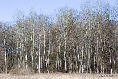 Волинський ліс InterNetri Ukraine 1790476256