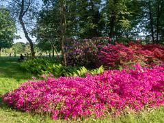 P5132012 (Photodendron) Tags: em1mk2 britzergarten blumen