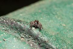 微距 (Babbychen) Tags: a6500 sony ilce6500 zeiss 50mm touit micro macro touit2850m