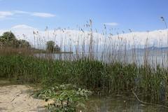 Les Grangettes (bulbocode909) Tags: vaud suisse grangettes nature printemps paysages arbres vert nuages bleu lacléman lacs eau noville
