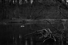 By the River (m.ashe7) Tags: nikon nikonf nikkor gunpowderfalls gunpowderfallsstatepark outdoors river park statepark maryland blackandwhite tmax400 d76 film kodak