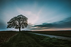 make like a tree... (Jess Feldon) Tags: landscape tree sky clouds cotswolds nailsworth gloucestershire jessfeldon lookslikefilm wideangle path branches countryside dusk light