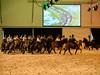 Gala der Gangpferde Bern (Blum Orlando) Tags: bea bern gala galadergangpferde gangpferde pferde tölt