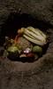 Composting 2 (dekufreed) Tags: cit154 composting garden