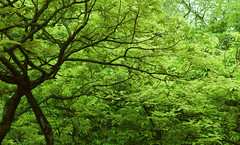 Into forest (wilsonphoto_a) Tags: forest tamron18200mmf3563diiivc b018 nikond3400 hongkong hongkongphotographer nature green clam