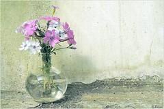 Spring Flowers (h.bresser) Tags: vase blumenvase spring flowers springflowers hbresser hartmutbresser bouquet