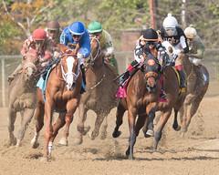 2018 Pimlico Race track (111) (maskirovka77) Tags: pimlico dirt mare race racehorse threeyearold turf yearling