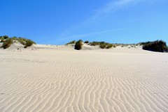 Un mar de arena. (Santos M. R.) Tags: esposende portugal arena duna playa atlántico cielo azul matorral verde nubes clouds